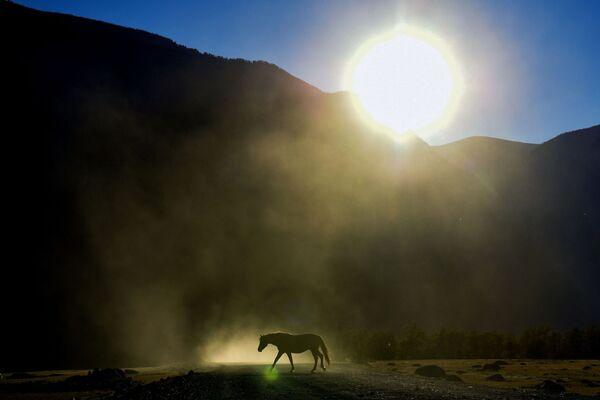 Ngựa chăn thả gần đường cao tốc ở thung lũng sông Chulyshman thuộc Cộng hòa Altai - Sputnik Việt Nam
