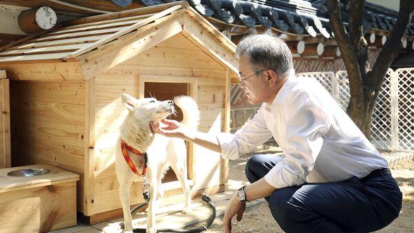 Tổng thống Hàn Quốc Moon Jae-in vuốt ve chú chó tên là Gomi - Sputnik Việt Nam