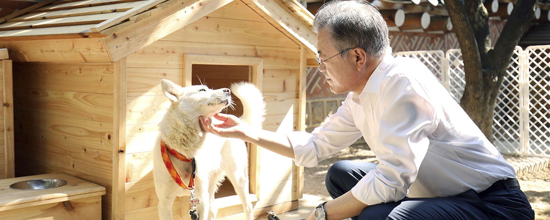 Tổng thống Hàn Quốc Moon Jae-in vuốt ve chú chó tên là Gomi - Sputnik Việt Nam, 1920, 29.09.2021