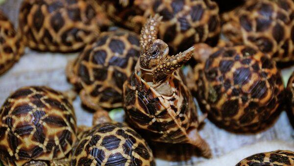 Rùa tại hải quan ở Bangkok - Sputnik Việt Nam