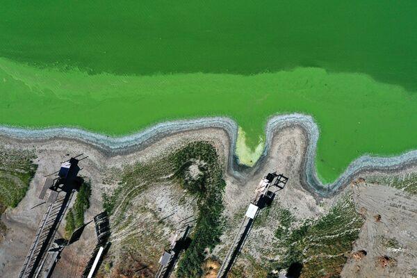 Tảo lục lam nở hoa trong Hồ Sạch của công viên Redbud, Hoa Kỳ  - Sputnik Việt Nam