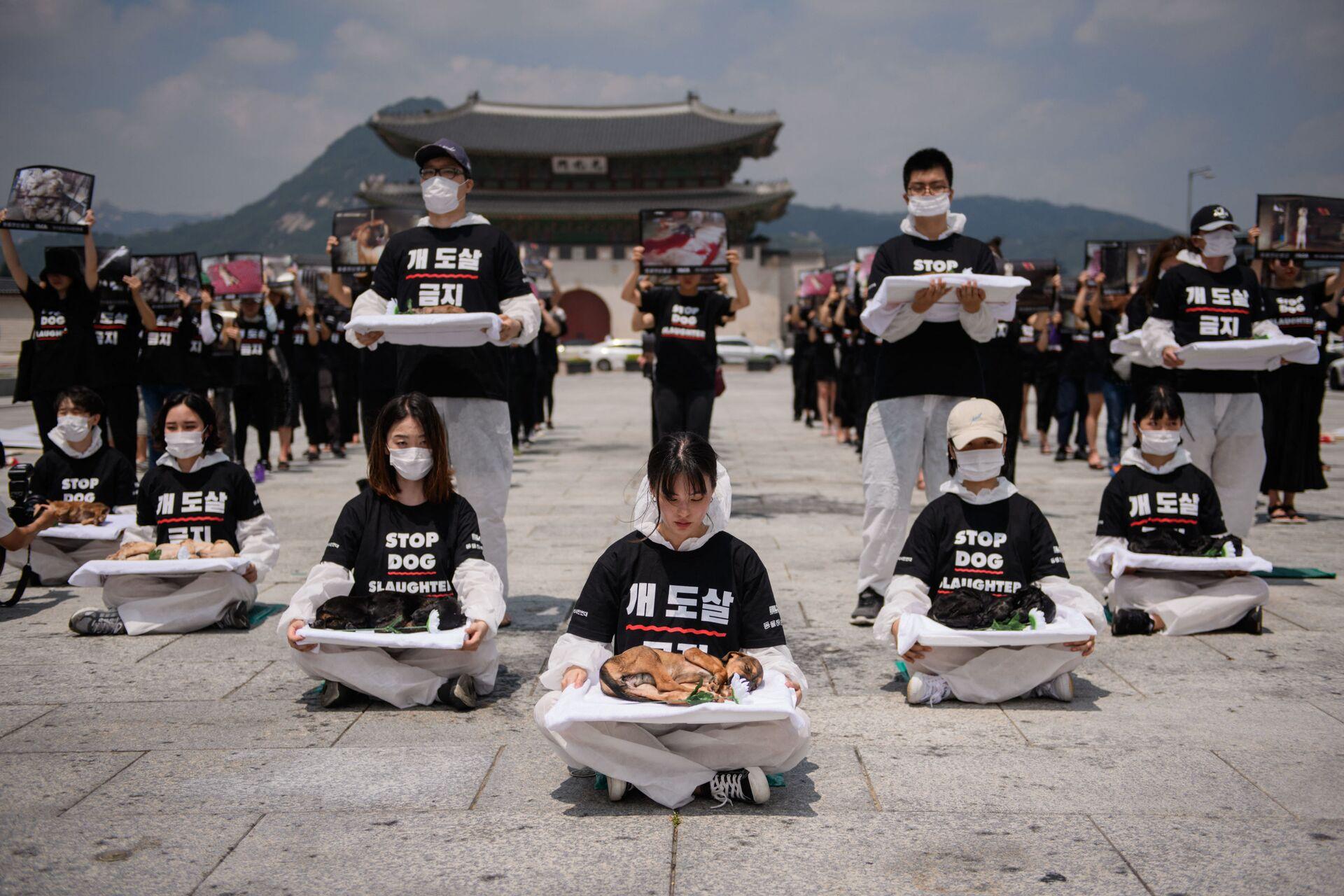 Các nhà bảo vệ động vật phản đối ăn thịt chó ở Seoul - Sputnik Việt Nam, 1920, 06.10.2021