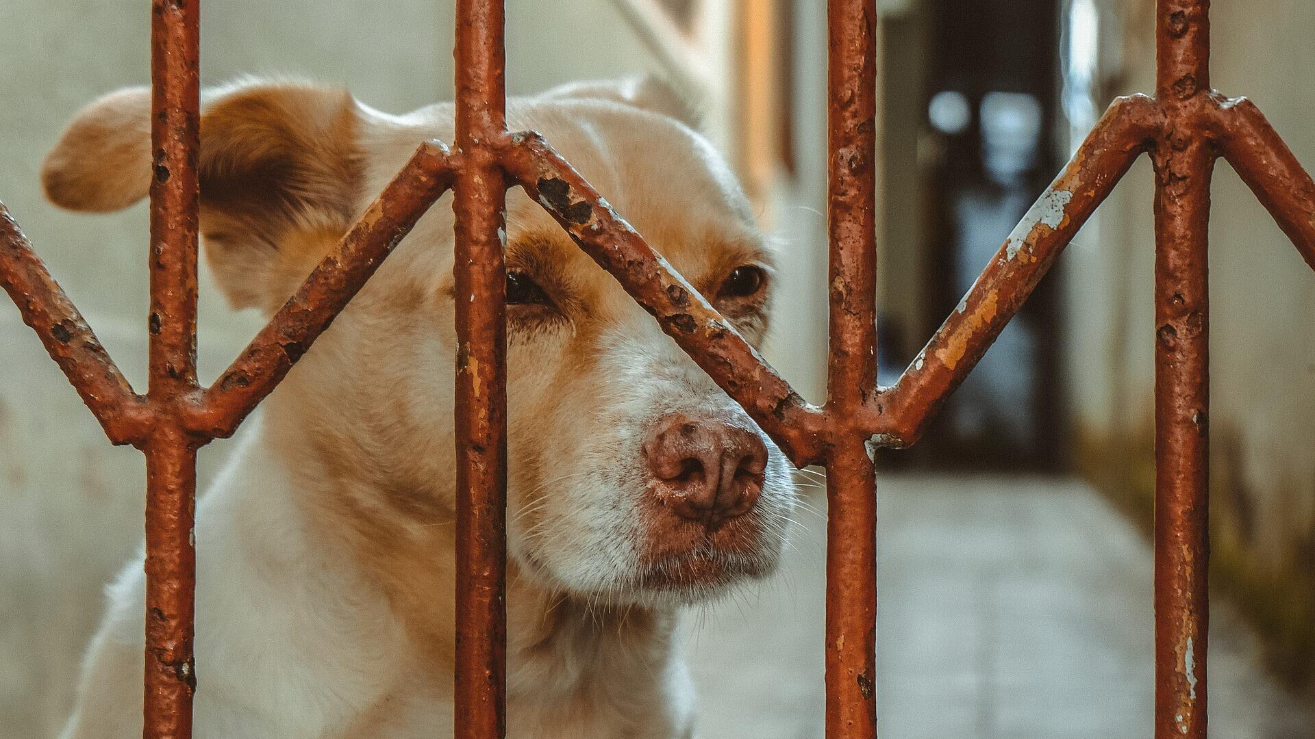 Con chó - Sputnik Việt Nam, 1920, 11.10.2021
