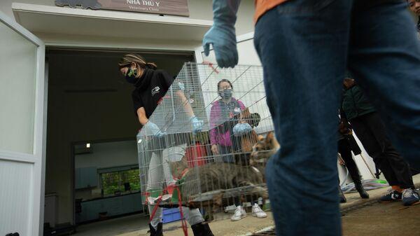 Hỗ trợ khám sức khỏe cho các đợt cứu hộ chó mèo tại Việt Nam - Sputnik Việt Nam