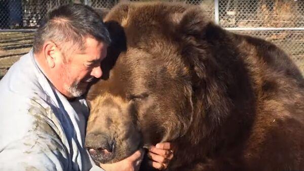Người chơi với con gấu khổng lồ - Sputnik Việt Nam