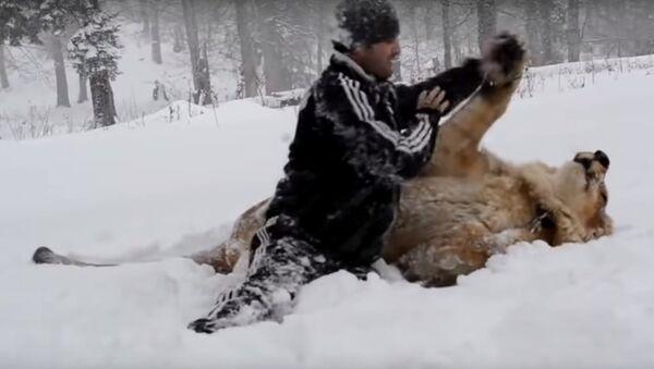 Đùa bỡn với sư tử trên tuyết - Sputnik Việt Nam
