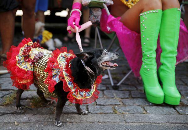 Người tham gia lễ hội cùng thú cưng ở Rio de Janeiro, ngày 6 tháng 2 năm 2016. - Sputnik Việt Nam