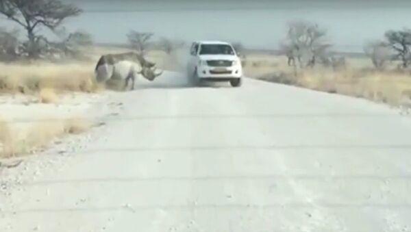 Tê giác húc xe jeep của du khách - Sputnik Việt Nam