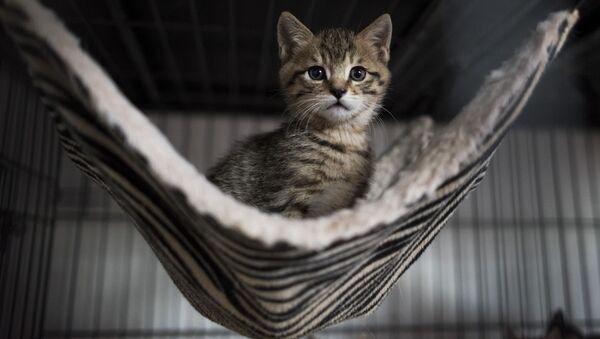 Сon mèo - Sputnik Việt Nam