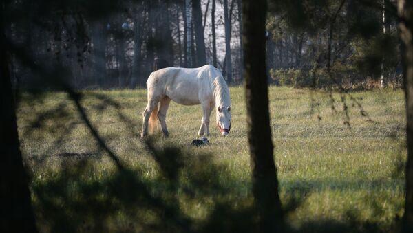 con ngựa - Sputnik Việt Nam