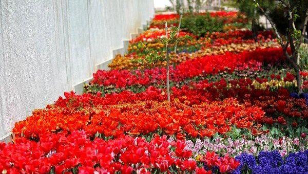 Tulips in Tehran - Sputnik Việt Nam