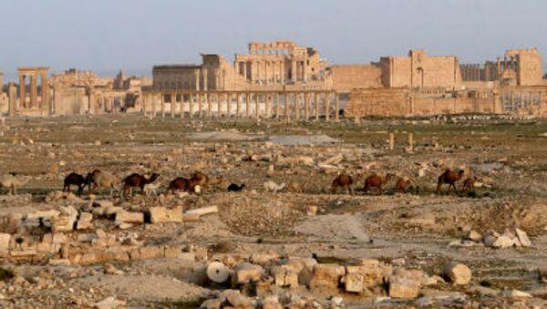 Древний оазис города Пальмира в Сирии - Sputnik Việt Nam