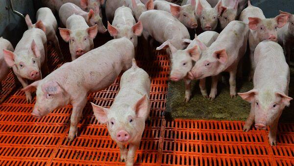 doanh nghiệp chăn nuôi  - Sputnik Việt Nam