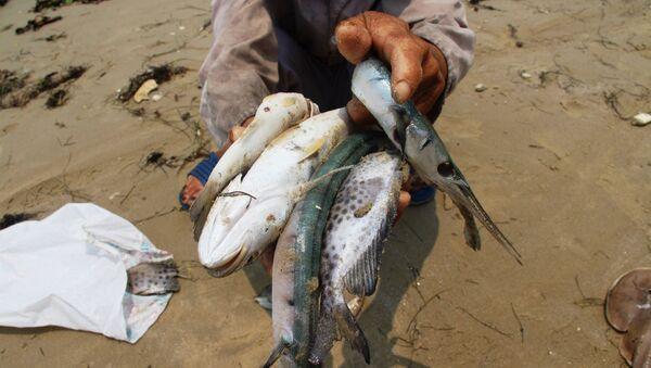 Sự cố công nghiệp là nguyên nhân khiến cá chết hàng loạt ở Việt Nam - Sputnik Việt Nam