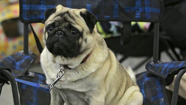 Con chó - Sputnik Việt Nam