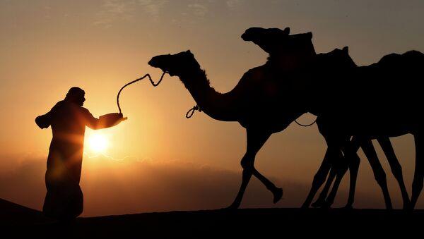 Người chăn lạc đà tại Ả Rập Saudi - Sputnik Việt Nam