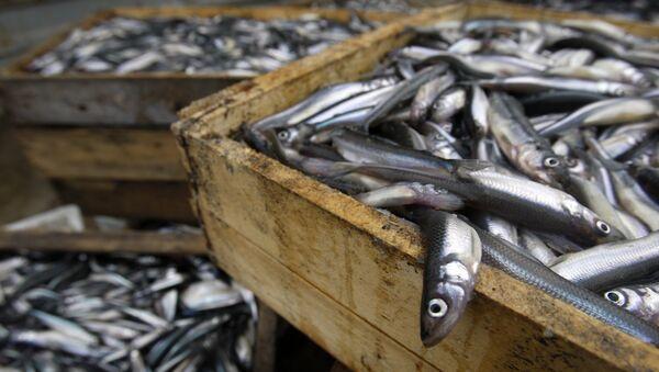Việc nuôi cá ở vùng Leningrad - Sputnik Việt Nam