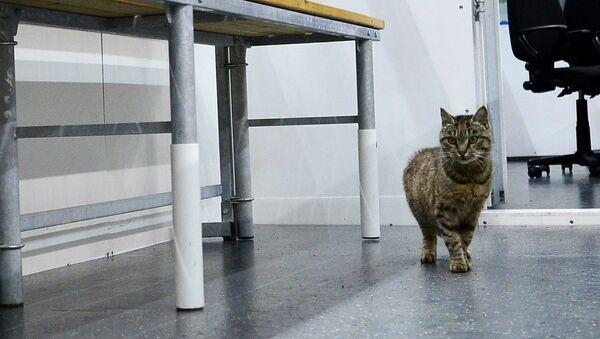 Mèo Matroska - Sputnik Việt Nam