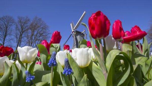 Hoa tulip trong công viên Keukenhof ở Hà Lan - Sputnik Việt Nam
