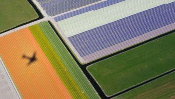 Cánh đồng hoa ở Hà Lan - Sputnik Việt Nam