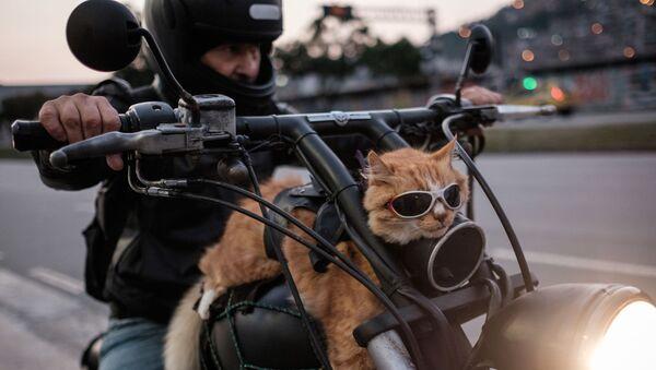 Tay đua mô tô và chú mèo hung trên chiếc xe ở Rio de Janeiro, Brazil - Sputnik Việt Nam