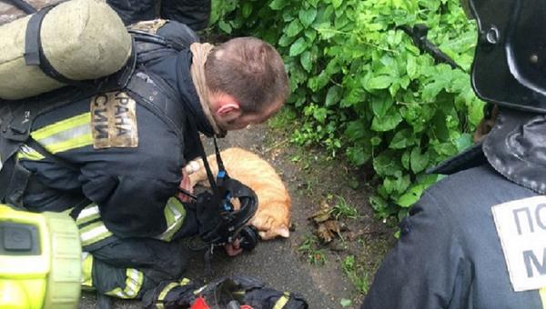 lực lượng cứu hộ St. Petersburg dùng mặt nạ dưỡng khí cứu mèo - Sputnik Việt Nam