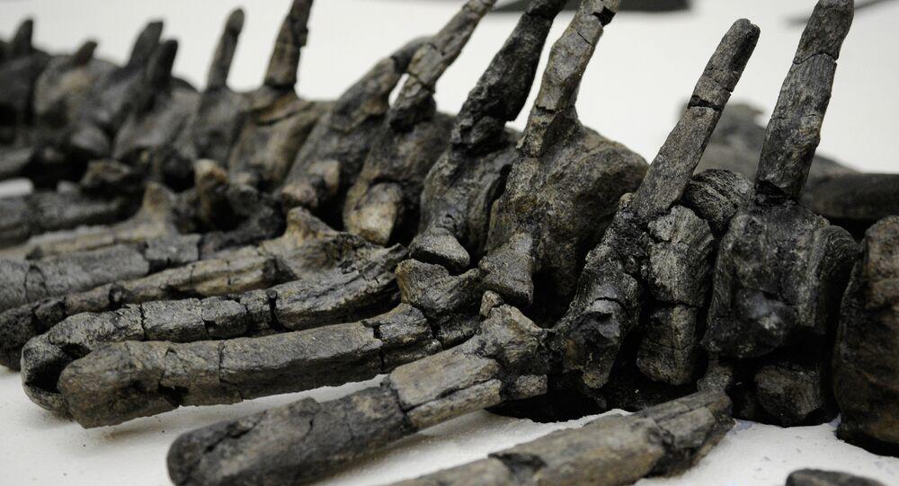 bộ xương khủng long