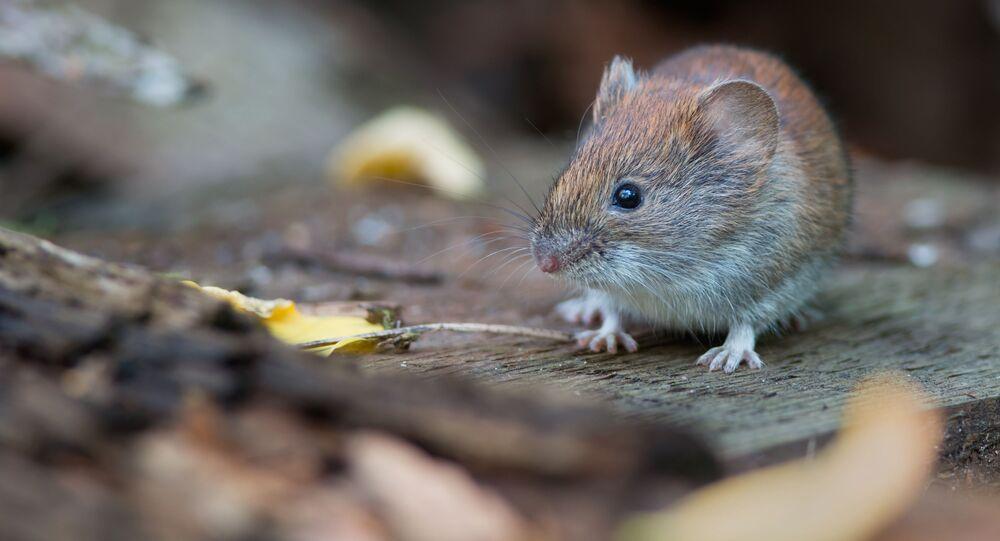 Con chuột