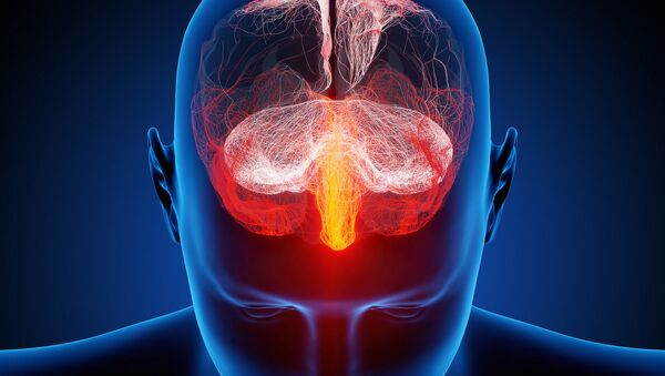 Não bộ của con người - Sputnik Việt Nam