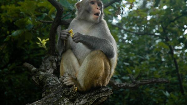 con khỉ - Sputnik Việt Nam