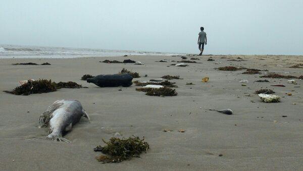 Hiện tượng cá chết hàng loạt ở vùng ven bờ biển miền Trung Việt Nam - Sputnik Việt Nam