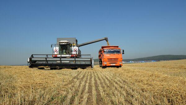 Thu hoạch ngũ cốc ở tỉnh Sverdlovsk - Sputnik Việt Nam