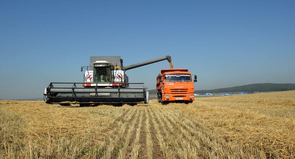 Thu hoạch ngũ cốc ở tỉnh Sverdlovsk