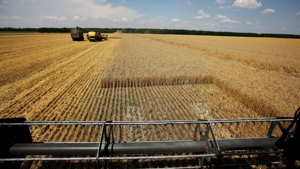 Thu hoạch lúa mì ở khu Krasnodar - Sputnik Việt Nam