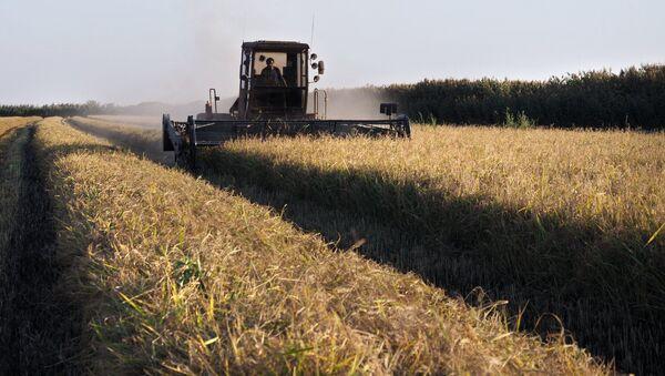 Thu hoạch lúa ở vùng  Krasnodar - Sputnik Việt Nam