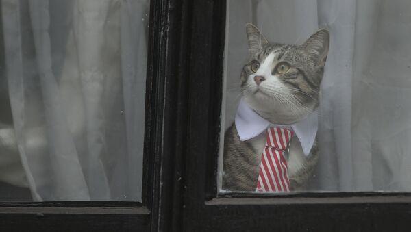 Mèo cưng của Julian Assange - Sputnik Việt Nam