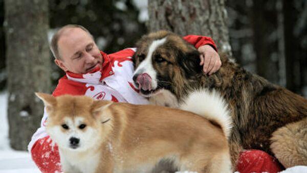 Tổng thống Nga Vladimir Putin với hai chó cưng Buffy và Yume đi dạo ở ngoại ô Matxcơva. - Sputnik Việt Nam