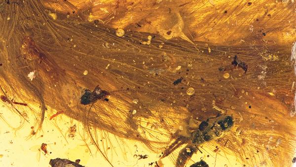 Khám phá độc đáo: Mảnh đuôi khủng long trong hổ phách - Sputnik Việt Nam