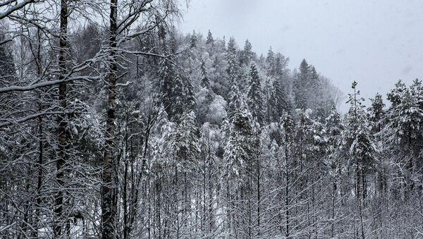 Tuyết phủ trắng rừng Nga - Sputnik Việt Nam