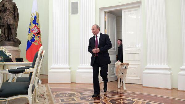 Tổng thống Nga Vladimir Putin với con chó Yume nòi Akita-Inu trước khi trả lời phỏng vấn với phóng viên Nhật - Sputnik Việt Nam