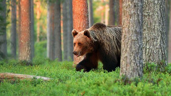 gấu - Sputnik Việt Nam