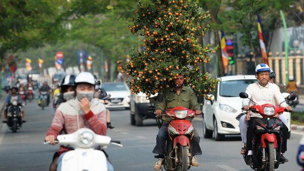 Vận chuyển quất đón Tết tại Hà Nội - Sputnik Việt Nam
