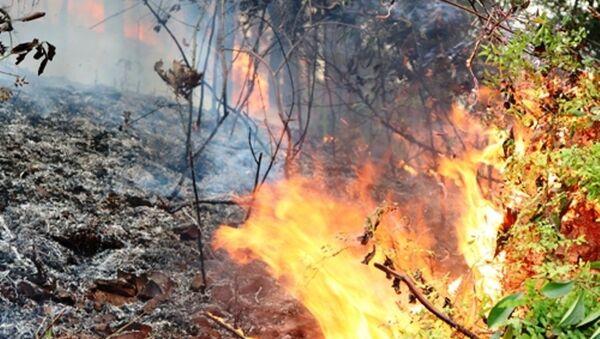 Rừng bạch đàn, keo trên núi Một, huyện Thủy Nguyên, Hải Phòng bùng cháy dữ dội. - Sputnik Việt Nam