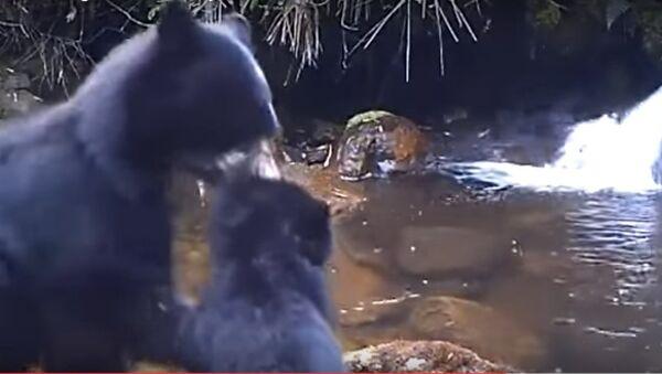 Gấu mẹ  bắt gấu con ngang bướng vượt sông - Sputnik Việt Nam