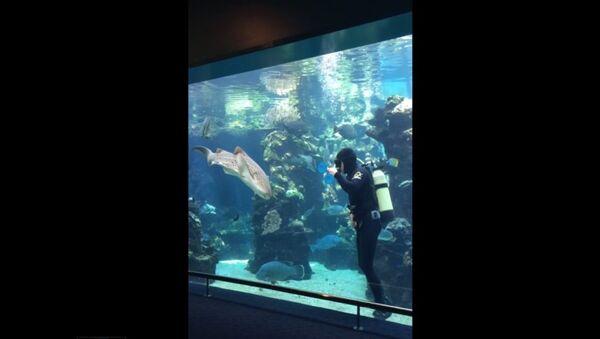Thợ lặn đang làm sạch bể cá thì cá mập đột nhiên xuất hiện - Sputnik Việt Nam