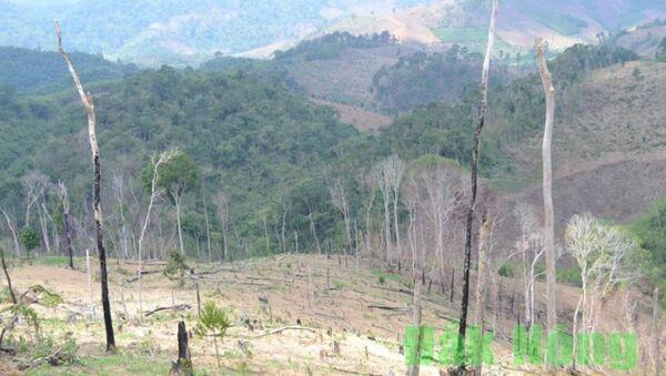 Việt Nam: Bắt cựu Giám đốc để mất hàng nghìn hec-ta rừng - Sputnik Việt Nam