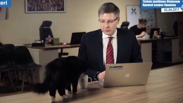 Mèo phá hỏng buổi phát sóng trực tuyến và uống trà của thị trưởng Riga - Sputnik Việt Nam