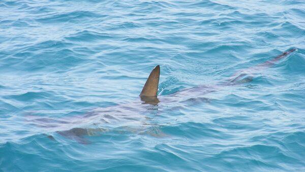 Cá mập - Sputnik Việt Nam