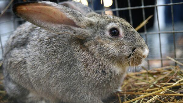 Con thỏ - Sputnik Việt Nam