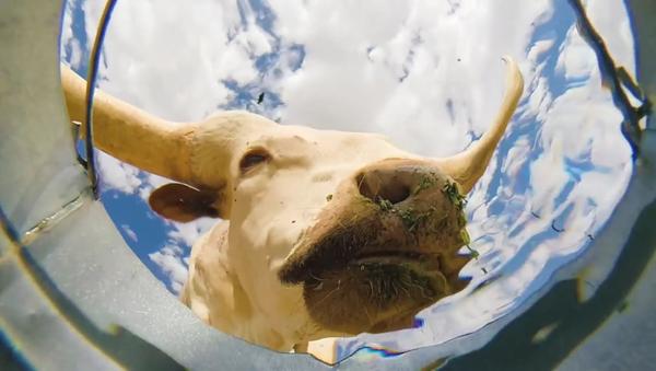 Video: Những con vật uống nước từ xô. Nhìn từ dưới đáy - Sputnik Việt Nam